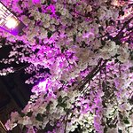 Within the restaurant their is a gorgeous blossom tree.