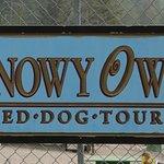 Snowy Owl Sled Dog Tours صورة