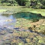 Foto de Magnolia Springs Park