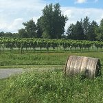 Foto Zephaniah Farm Vineyard