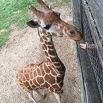 صورة فوتوغرافية لـ Binder Park Zoo