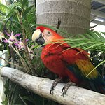 Kishi the blind parrot! She will greet you as you arrive!