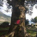 Ο Περίφημος πλάτανος του Αλή πασά (Ηλικίας 700 ετών)