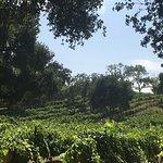 Bild från Wine Canyon Tours