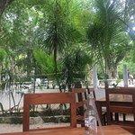 Фотография Cenote Zacil-Ha