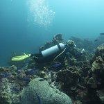 Prachtig coraal, zeer mooi duiken...ook op Curacao