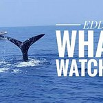 Whale and Dolphin Watching Tour