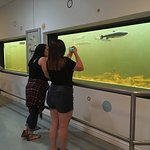 Visitors love to photograph the salmon at our observation pool,