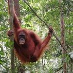 Photo of Bukit Lawang Guide