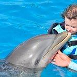 Photo of Dolphin Discovery Punta Cana