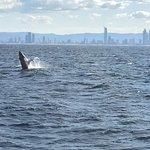 Spirit of Gold Coast Whale Watching Resmi