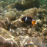 Snorkel with fish