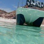 Billede af Fun Baja Whale Watching