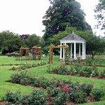Rose Garden mid-summer