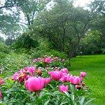 Φωτογραφία: The Frelinghuysen Arboretum
