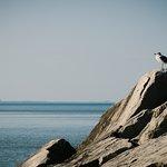 Foto Rosewood Beach
