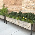 Lucky Fish's Herb Garden on the patio.