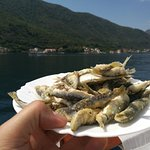 Photo of Kotor Private Tours and Excursions