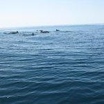 Фотография Dolphin Seafaris
