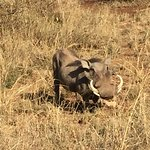Foto van Tanzanite Experience