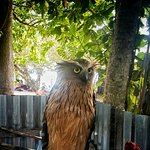 Фотография Kapas Island