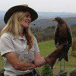 African Bird of Prey Sanctuary照片