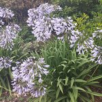 Minterne Gardens照片