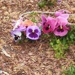 Tanger Family Bicentennial Garden Foto