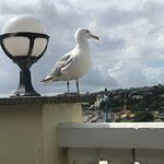 one of the many gulls awaiting ur discards...