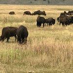 The herd!