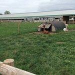 Снимок Attwell Farm Park