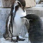 Zoo Karlsruhe, tierisch schöner Tag 😍