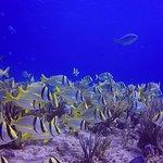 Pro Dive Mexicoの写真