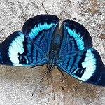 Casi llegando a la catarata,se posan estas hermosas mariposas.