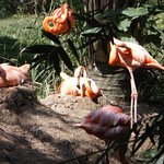 Riverbanks Zoo and Botanical Garden의 사진