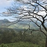 Φωτογραφία: Kandy Green Tours