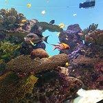 ภาพถ่ายของ Tokyo Sea Life Park