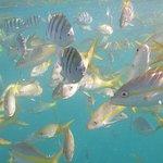 Foto de Starfish Snorkeling