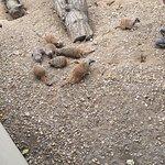 Φωτογραφία: Filey Bird Garden & Animal Park