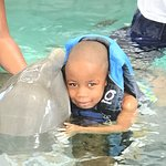 Dolphin Encounters Foto