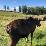 Foto de Moose Garden