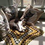 Um espaço confortável para felinos.