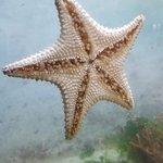 DR starfish