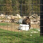 Colorado Wolf and Wildlife Center照片