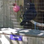 Foto de North Island Wildlife Recovery Centre