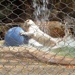 Play time in Siegried & Roy's Secret Garden