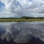 Capt Mitch's - Everglades Private Airboat Toursの写真