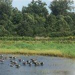 Montezuma National Wildlife Refuge لوحة