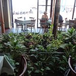 Beautiful plants inside the restaurant