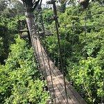 Photo of Angkor Zipline